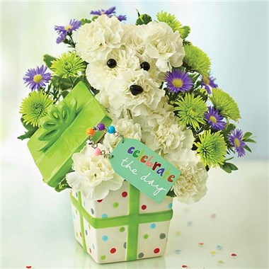 1 800 Flowers Party Pooch Always Beautiful Floral Design Studio